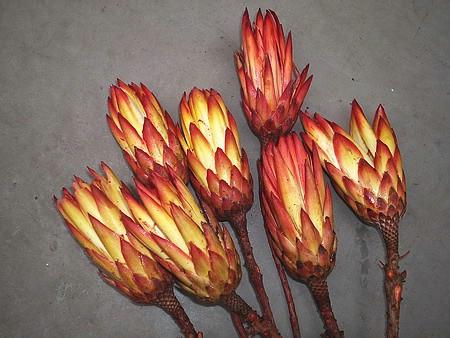 Květinářství » Suché vazby